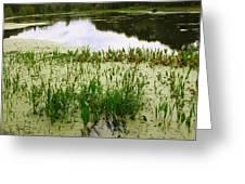 Duckweed Reflection Greeting Card