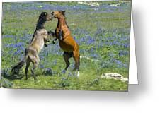 Dueling Mustangs Greeting Card