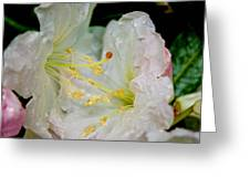 Dueling Rhododendrons Greeting Card