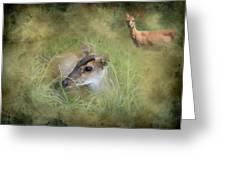 Duiker Endangered Antelope Greeting Card