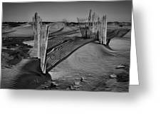 Dune Erosion Fence Outer Banks Nc B And W Img_3761 Greeting Card