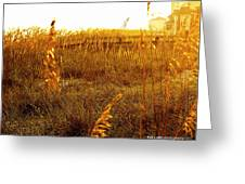 Dunes And Seaoats  Greeting Card