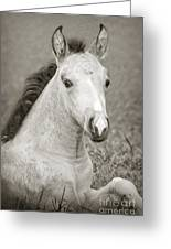 Dunn Filly Greeting Card