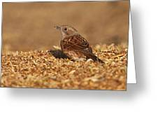 Dunnock Greeting Card