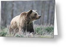 Dunraven Grizzly Greeting Card