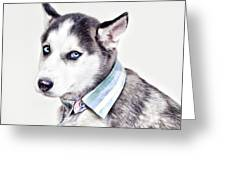Duoduo The Husky Greeting Card
