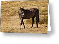 Durango Greeting Card