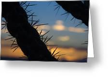 Dusk Settles On A Desert Cholla Cactus Greeting Card
