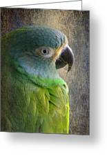 Dusky Conure Greeting Card