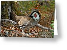 Dusky Grouse Cock Greeting Card