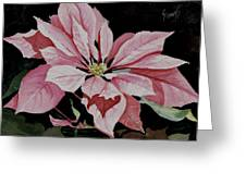 Dustie's Poinsettia Greeting Card
