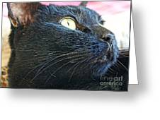 Dusty Black Cat Greeting Card