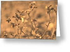 Dusty Desert  Greeting Card