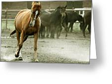 Dusty Paddock Greeting Card