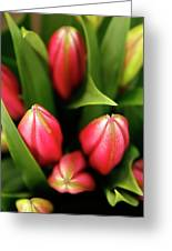 Dutch Bulbs Greeting Card