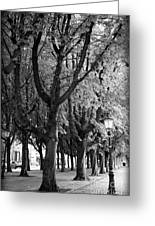 Dutch City Trees - Black And White Greeting Card