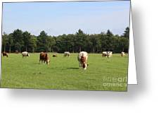 Dutch Landscape With Cows Greeting Card