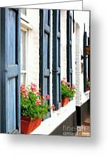 Dutch Window Boxes Greeting Card