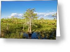 Dwarf Cypress Trees In A Field Greeting Card