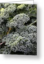 Dwarf Kale Greeting Card