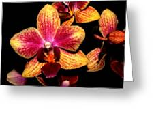 Dwarf Orchid Greeting Card