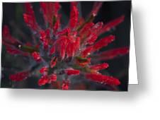 Dyed With Blood Greeting Card