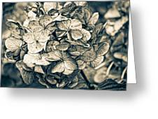 Dying Beauty Black And White Greeting Card