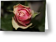 Dying Rose Greeting Card