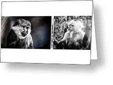 diptych Last hope of Freedom  Greeting Card