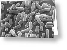 E. Coli Bacteria Sem X25,000 Greeting Card