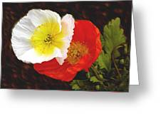 Eager Poppies Greeting Card