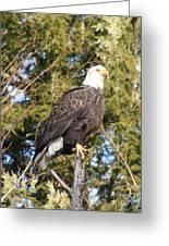Eagle 1979 Greeting Card