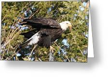 Eagle 1982 Greeting Card