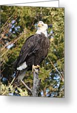 Eagle 1985 Greeting Card