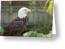 Eagle 2 Greeting Card
