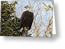 Eagle 6 Greeting Card