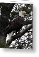 Eagle 9786 Greeting Card