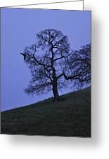Eagle And The Oak Greeting Card