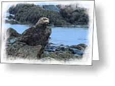 Eagle At Rest Greeting Card