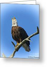 Eagle Calling Greeting Card