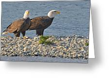 Eagle Couple Greeting Card