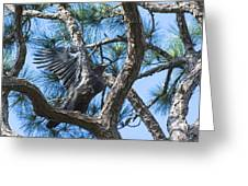 Eagle Flight Prep Greeting Card