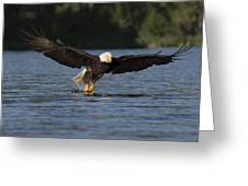 Eagle In Action Series Greeting Card