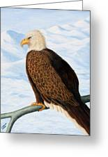 Eagle In Alaska Greeting Card