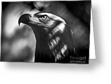 Eagle In Shadows Greeting Card