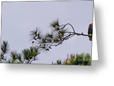 Eagle In The Pines Greeting Card
