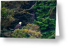 Eagle In Trees  Greeting Card