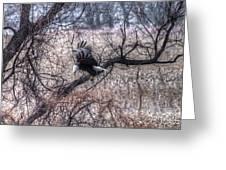 Eagle Landing 1 Greeting Card