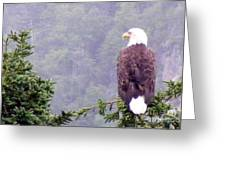 Eagle Looking For Breakfast On A Misty Morning Greeting Card