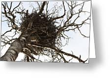 Eagle Nest Greeting Card